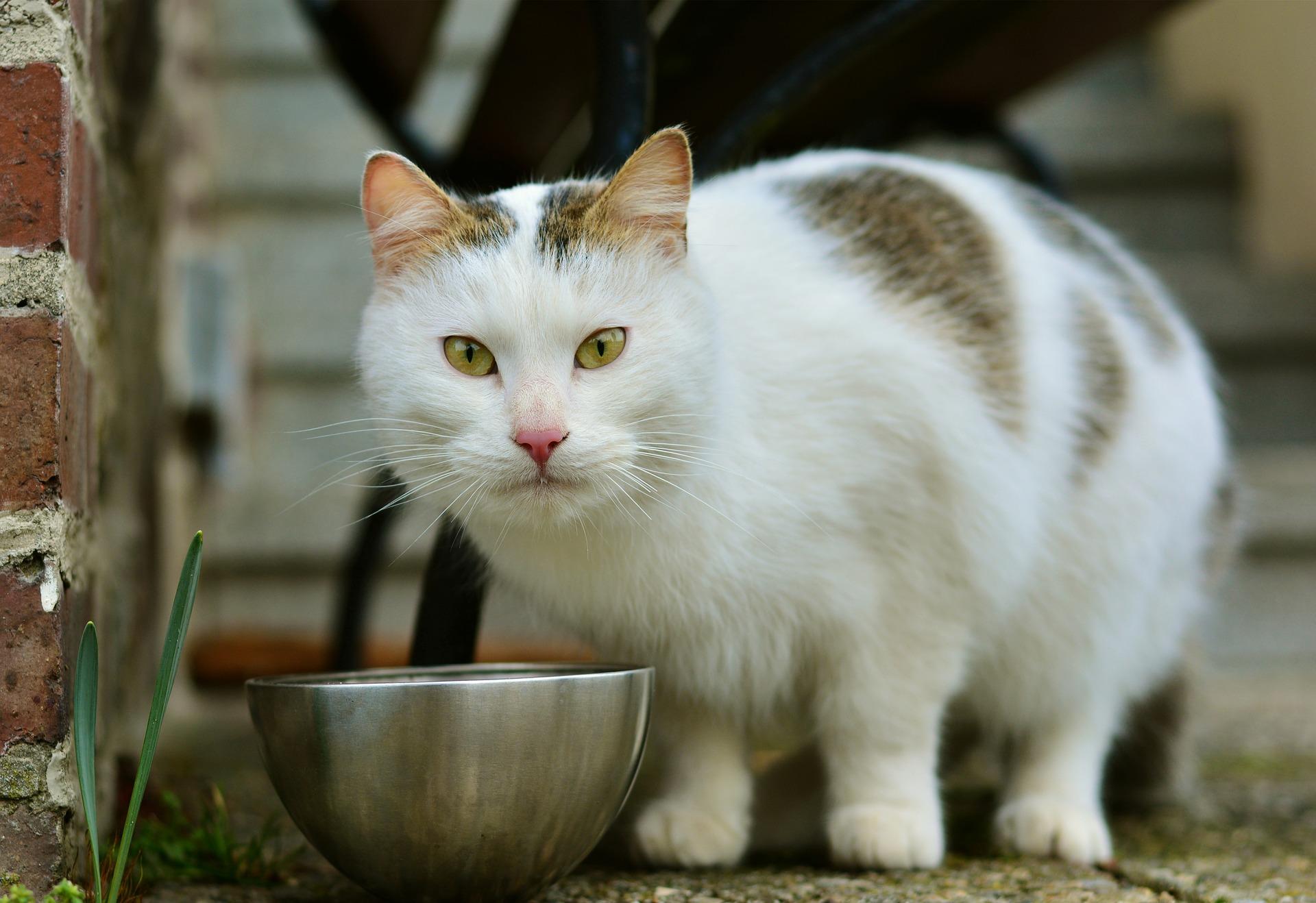 A cat sitting in a bowl